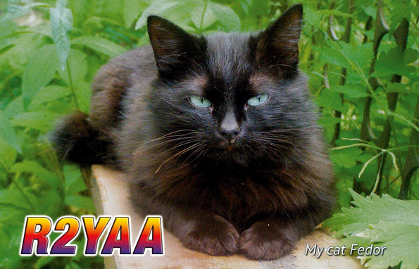 Primary Image for R2YAA