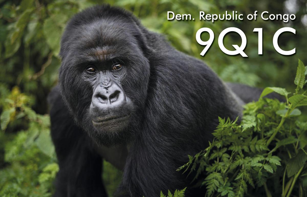 Primary Image for 9Q1C