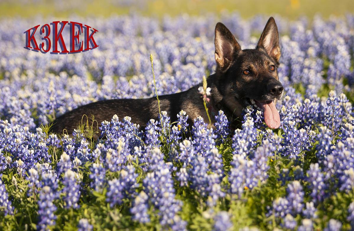 Primary Image for K3KEK