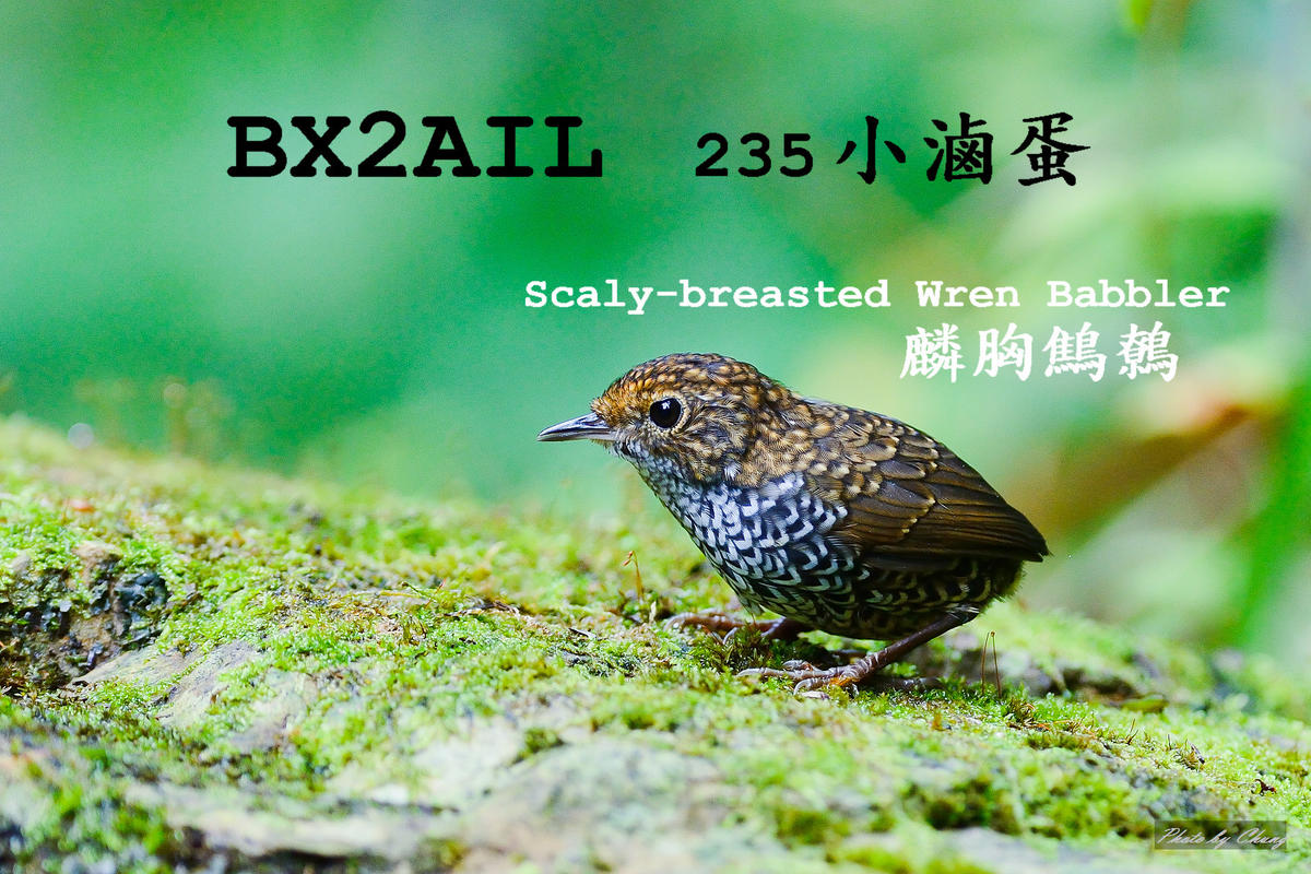 Primary Image for BX2AIL